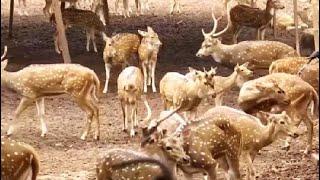 Bhubaneswar Zoo Reopens - NDTV