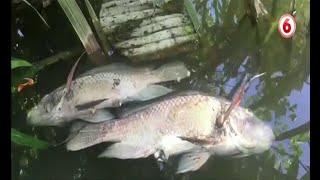Localizan cientos de peces muertos en Limón