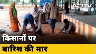 मध्य प्रदेश : किसानों को बारिश से हो रहा नुकसान - NDTVINDIA