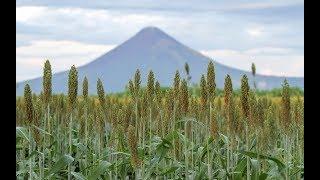 Sorgueros buscan nuevos mercados en región centroamericana