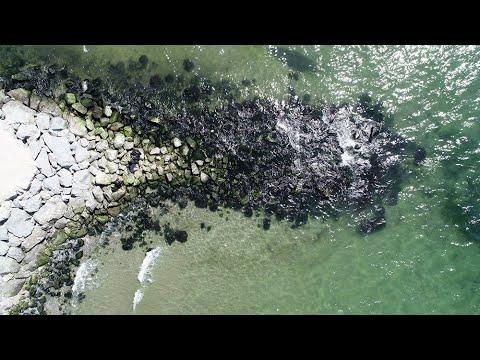 İstanbul'da Denizdeki Çekilme Endişelendirdi; Uzmanından Açıklama Geldi