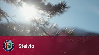 Alfa Romeo Stelvio – I've been here for a long time