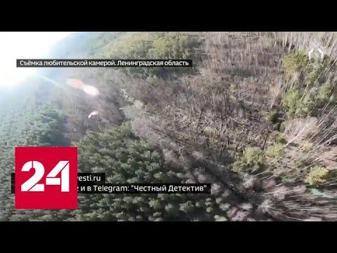 Руководитель питерского аэроклуба попал под следствие