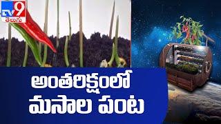 అంతరిక్షంలో మసాల పంట | Space Masala - TV9 - TV9