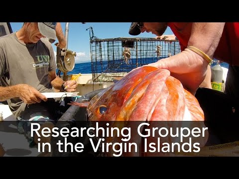 Grouper Spawning Aggregation Research at UVI