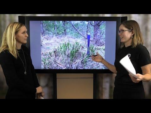 Viltanpassad skogsskötsel i praktiken - seminarium 1