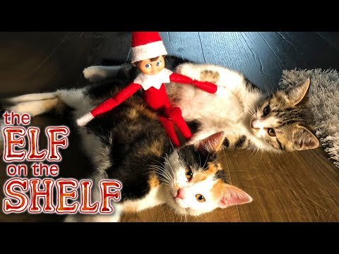 Elf On The Shelf - Elf Vs Cats - Christmas Kids Parody Ep.3