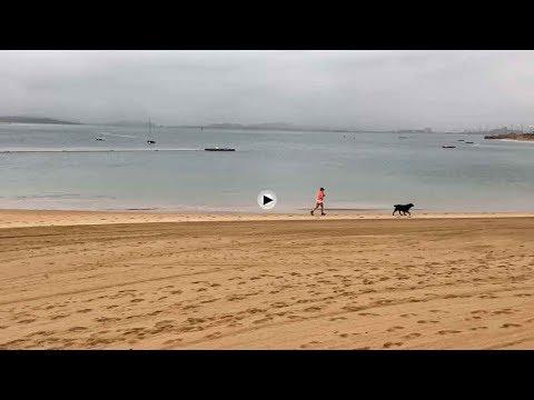 Corriendo la playa bajo la ligera lluvia. Amo y perro