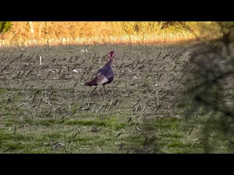 Bushcraft Daycamp : Stalking Wild Turkey, Fieldcraft