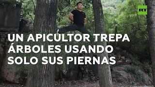 Un hombre trepa por árboles con solo sus piernas y sin usar las manos