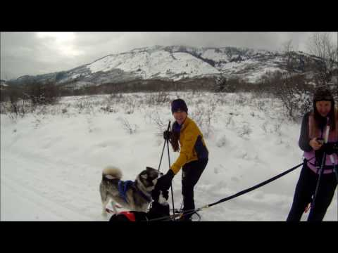 Skijoring with Dice at North Fork Park
