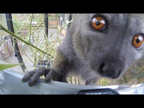 Djuren sköter snacket: Kitty rapporterar