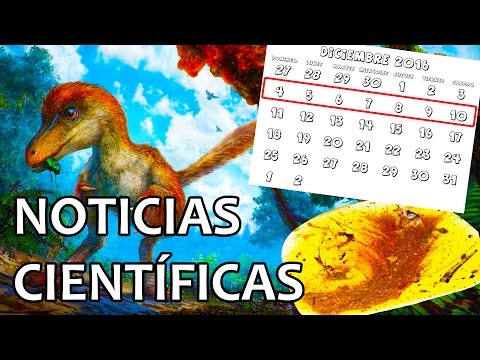 Primeras plumas de dinosaurio | Noticias 12/12/2016
