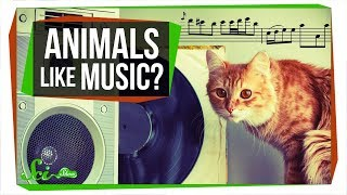 Do Animals Appreciate Music?