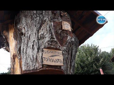 BTA: Топола на 300 години приюти в ствола си библиотека с книги на Иван Вазов