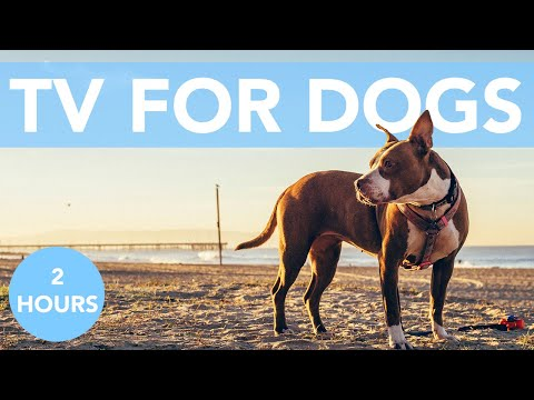 DOG TV MUSIC! Videos to Entertain Your Dog or Puppy! NEW 2021!