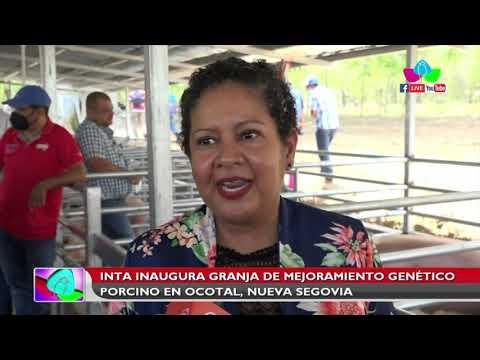 Inauguran granja de mejoramiento genético porcino en Ocotal, Nueva Segovia