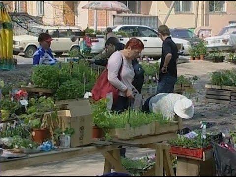 Что пользовалось спросом у садоводов в 2008 году. Архив ТВ2