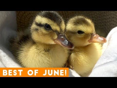 Ultimate Animal Reactions & Bloopers of June  2018 | Funny Pet Videos