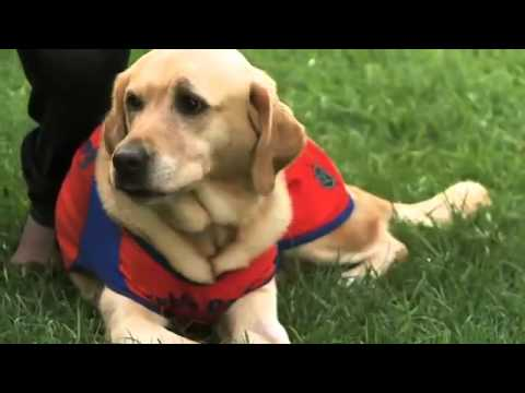 Group Testimonial - Guide Dogs South East Qld