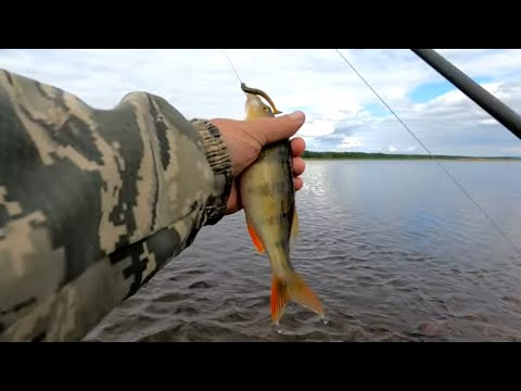 Рыбалка на спиннинг с берега / Китайская резина косит окуня / Нашел мертвого налима на берегу