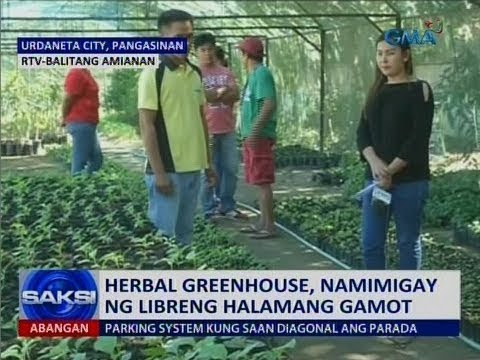 Saksi: Herbal greenhouse, namimigay ng libreng halamang gamot