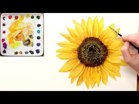 How to paint a realistic sunflower in watercolour with Anna Mason