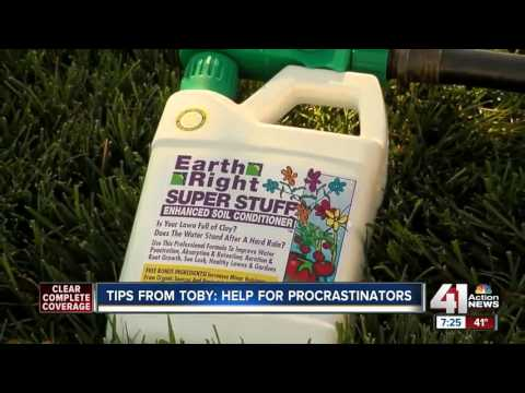 Tips from Toby: lawn care for procrastinators