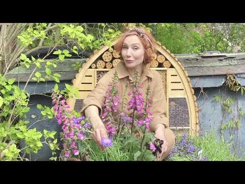 Pollinatörsträdgården - del 3: Växterna