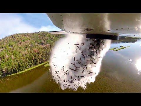 Они Сбрасывают Рыбу с Самолетов в Озёра, и Вот Почему