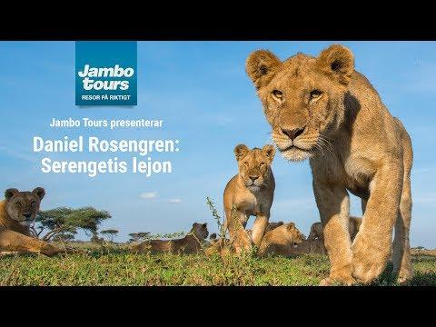 Den stora lejonresan med Daniel Rosengren