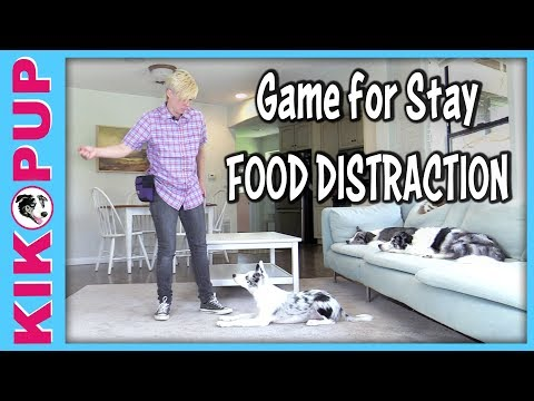 GAME for STAY - Stay with food distractions