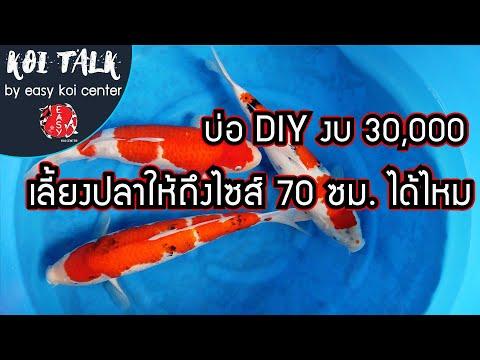Koi-Talk-EP.13-บ่อปลาคาร์ฟ-DIY