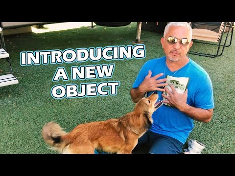 Introducing A New Object To Your Dog