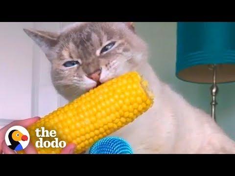 Cat ASMR Is So Relaxing | The Dodo | The Dodo