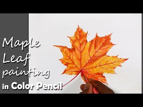 How to Paint Maple Leaf in Color Pencil