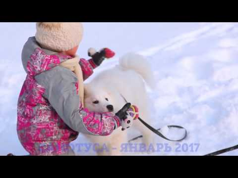 Самотуса -2017 г. Томск. Томскфильм. Собаки и щенки Томска от заводчиков.