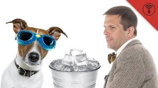 Is Feeding Ice to Dogs Really Dangerous? | Don't Be Dumb