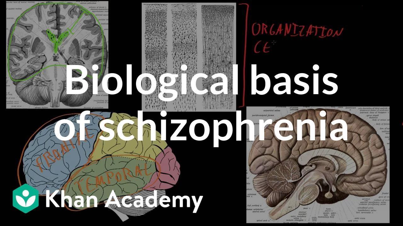 Biological basis of schizophrenia | Behavior | MCAT | Khan Academy