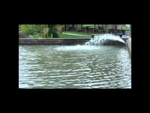 Download youtube mp3 como oxigenar el agua para tilapia for Como oxigenar el agua de un estanque sin electricidad
