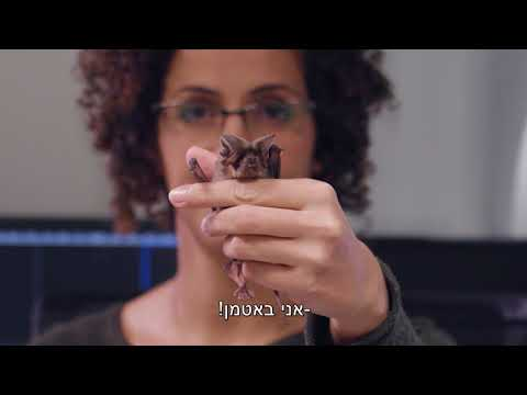 תכנית לימודים חד-חוגית בפיזיקה עם חטיבה במדעי המוח - סרטון