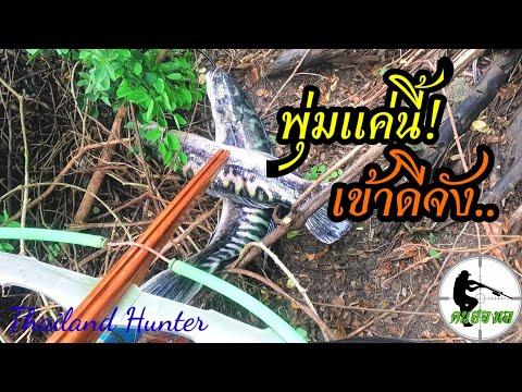 #SHOOT-FISH-ยิงปลาชะโดเข้าพุ่ม
