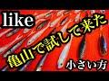 亀山ダムで話題のワカサギパターン攻略ルアー、ライクを試して来たよー