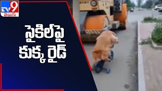 Viral Video: రోడ్డుపై సైకిల్ తొక్కిన శునకం - TV9 - TV9
