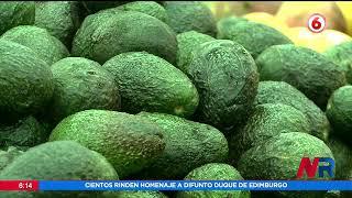 Piden a agricultores nacionales producir más aguacate tico