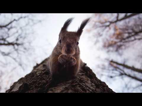 Wildlife Photography by Konsta Punkka   Skillshare Teacher Spotlight