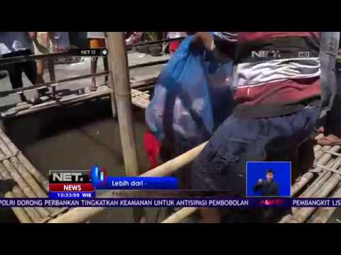 Panen Ikan Nila di Yogyakarta - NET 12