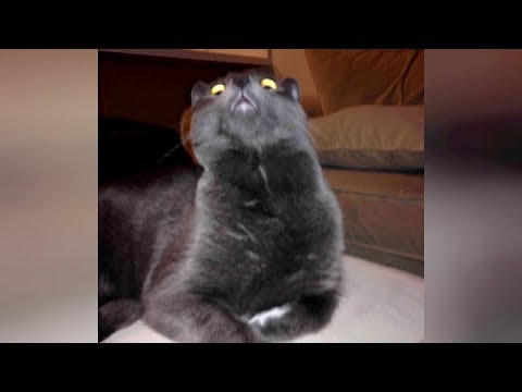 connectYoutube - ANIMAL VIDEOS soooo FUNNY that you will be STUNNED! - TRY NOT TO LAUGH!