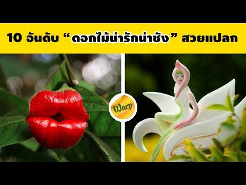 10-อันดับ-ดอกไม้น่ารัก-ดอกไม้น