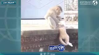 القرود ماخلت احد في حاله